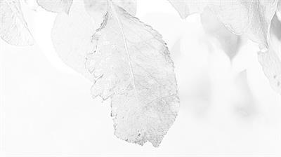 สร้างภาพ Sketch คลิกเดียว ด้วยโปรแกรม Photo Sketch Maker